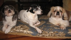 A Toile Bed for the Puppies!
