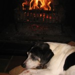 Gertie loves the fire!