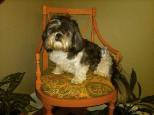Duff in the Dining Chair Makeover