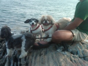 Gertie and Barney like the ocean in Maine . . .